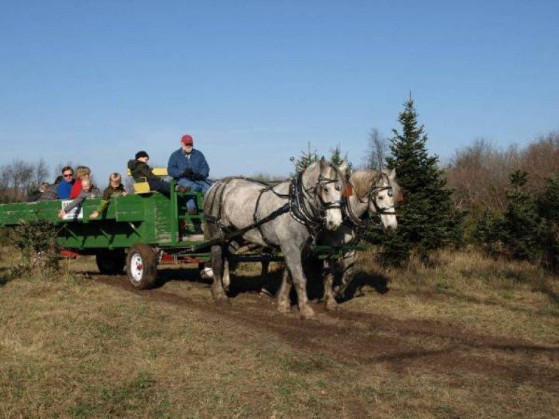 Holiday Guide Cut Your Own Christmas Tree Farms
