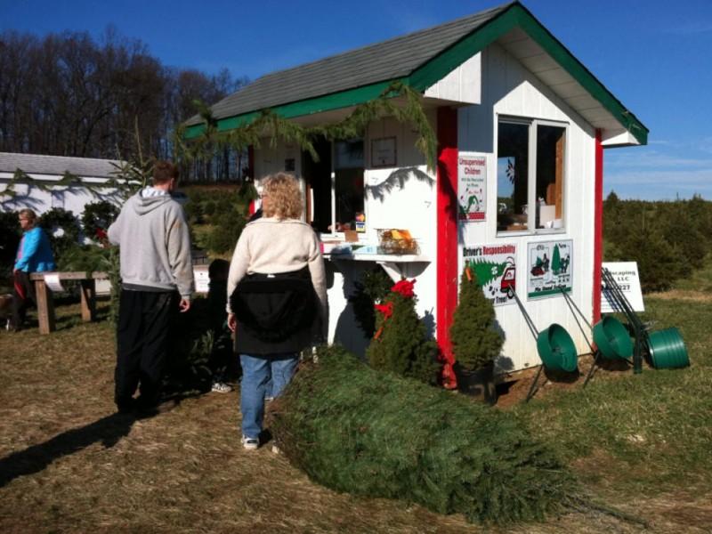 Christmas Tree Farms In Carroll County