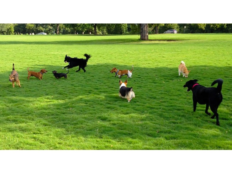 Suffield Dog Park