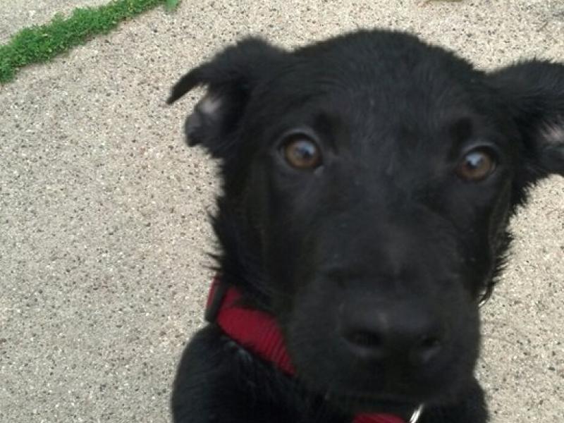 Petsmart Dog Adoption In Illinois