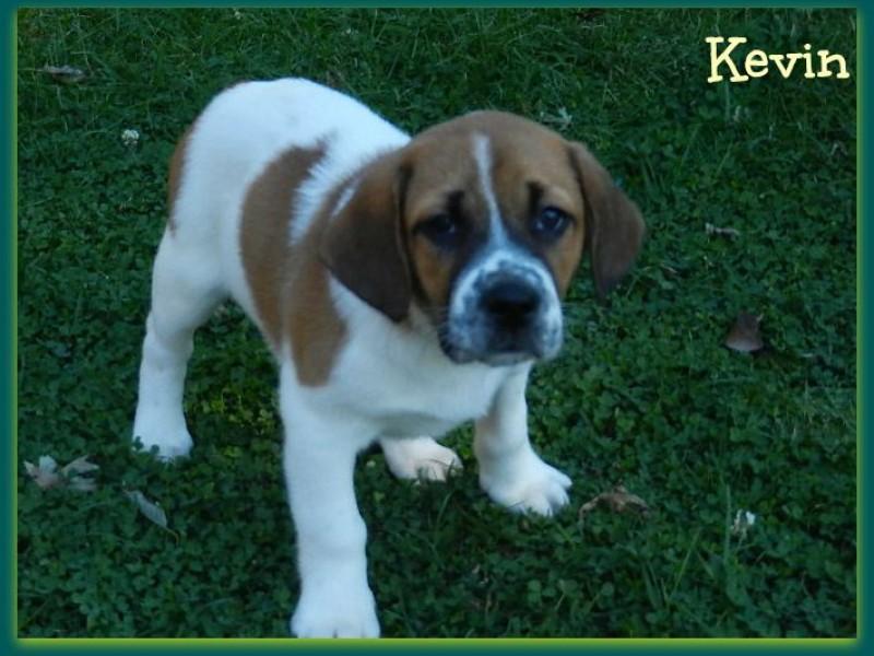 Petco Rescue Dogs For Adoption