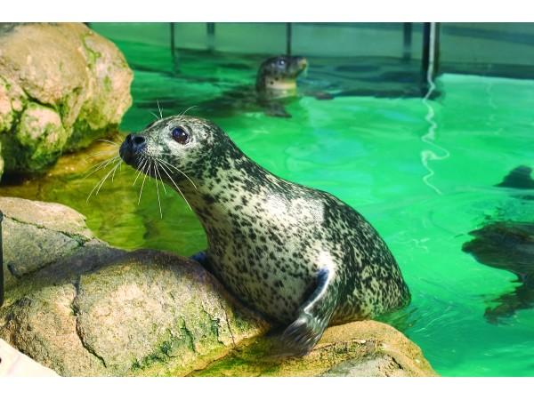 Maritime Aquarium Offers Feb Programs Norwalk Ct Patch
