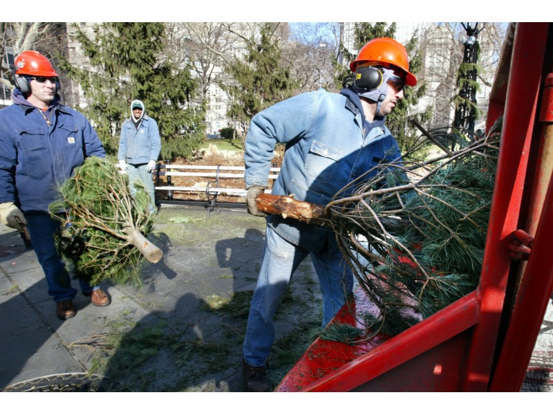 Recycle Your Live Christmas Trees At 'Bring One For The