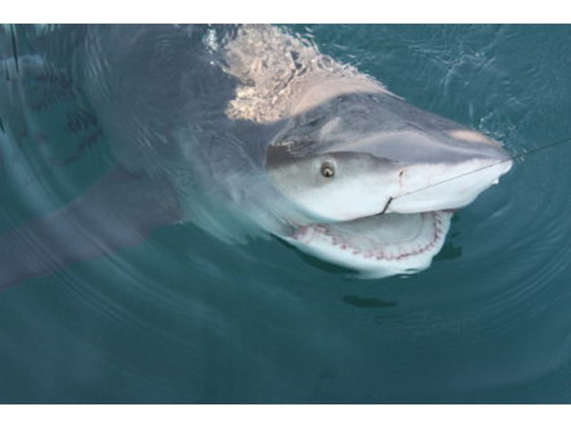 Florida shark attack prime time is now patch for What time will the fish bite today