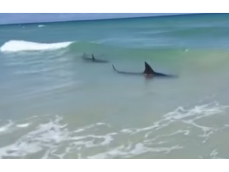 Shark Spotted In Miami Beach