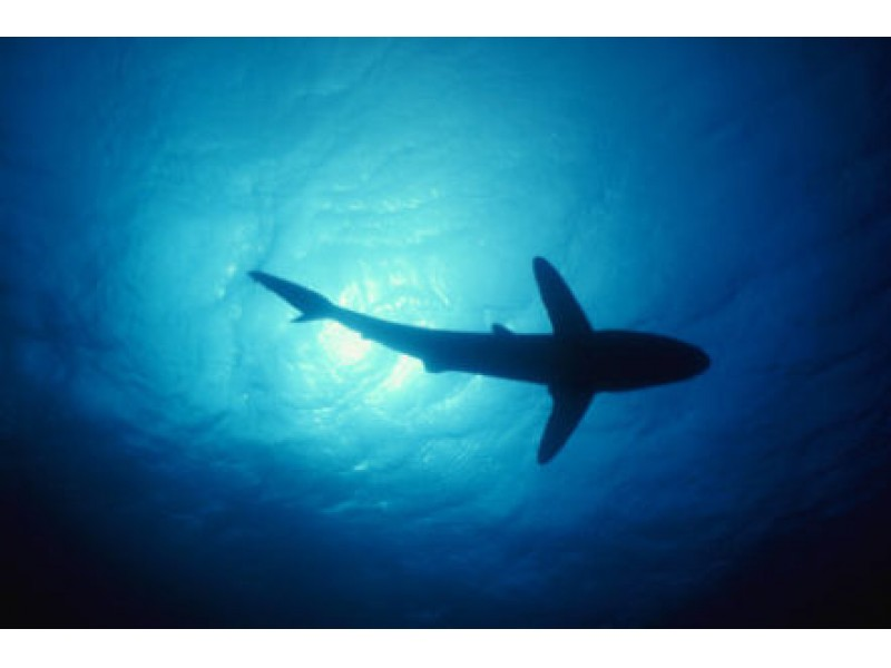 Shark Bites 10 Year Old At Daytona Beach Shores St Pete