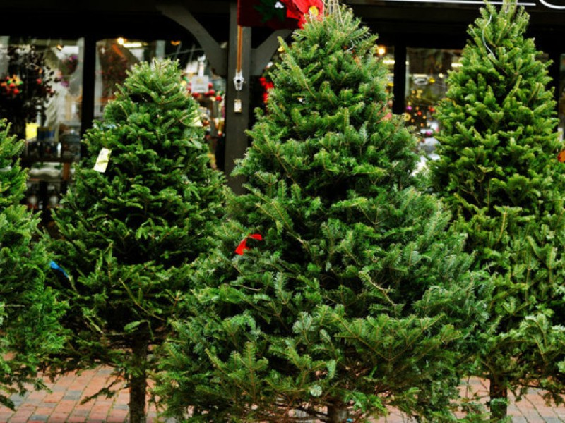 Where To Buy Christmas Trees In Waltham