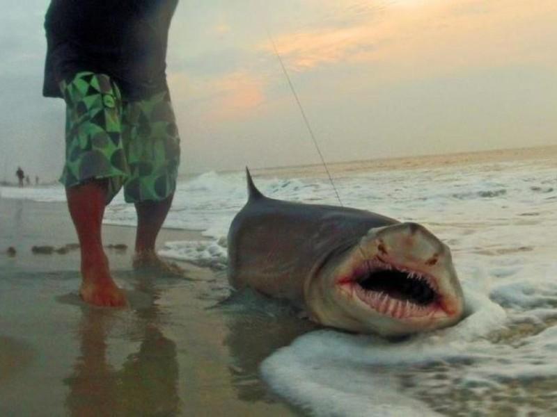 Shark New Jersey Beach