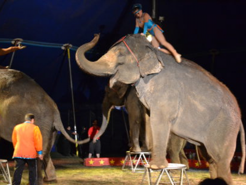 Animal Abuse Circus Animal Abuse Allegations