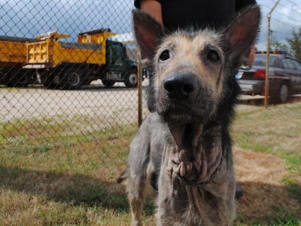 Coventry Rhode Island Animal Control
