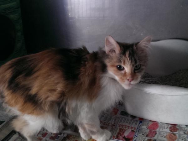 Cat Adoption Cranston Ri