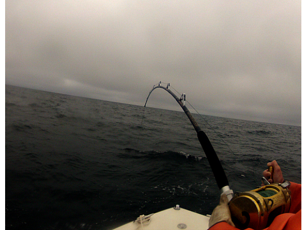 Close to shore shark fishing report falmouth ma patch for Shark fishing from shore