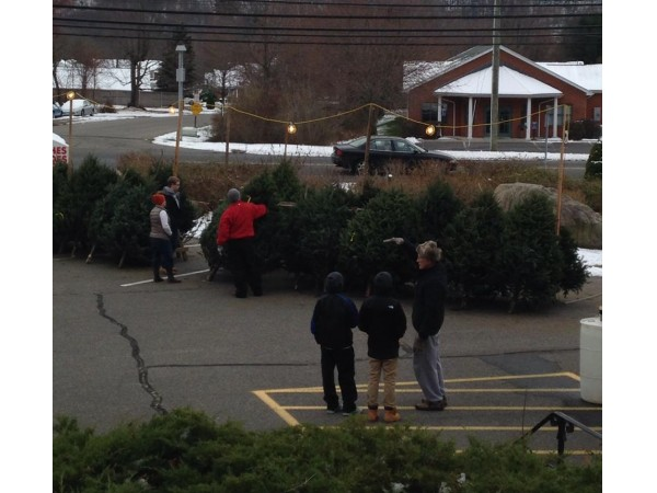 Walmart Live Christmas Trees