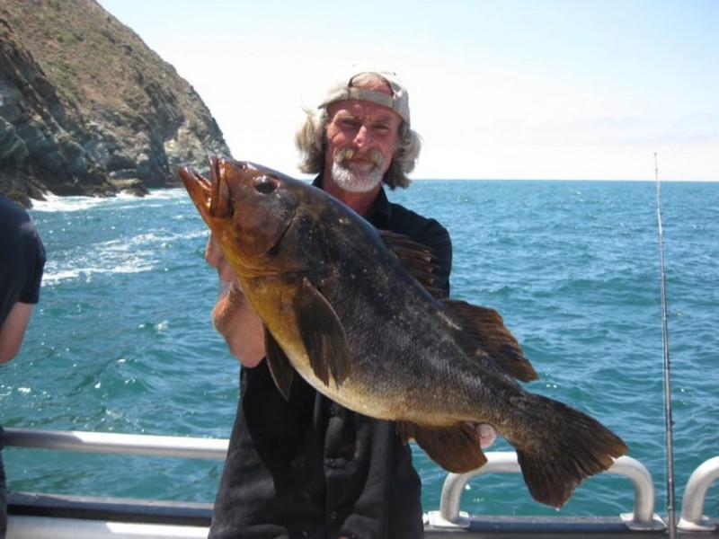Shark week white seabass and tuna belmont shore ca patch for Tuna fishing california