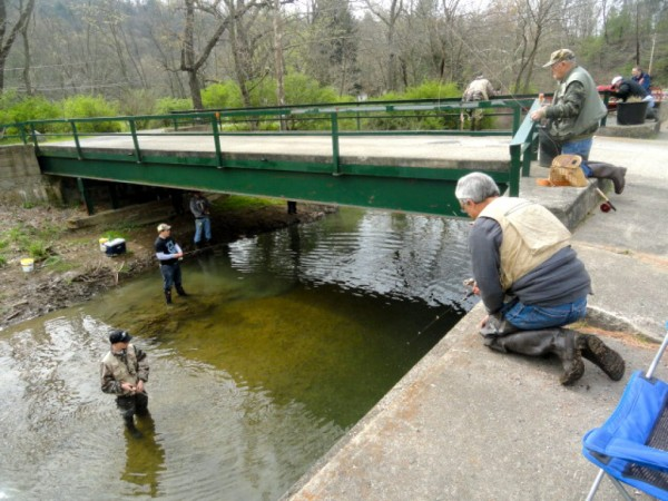 pa fish and boat commission begins trout stocking pine