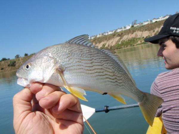 Sport fishing report grunion to run tonight newport for Newport landing fish report