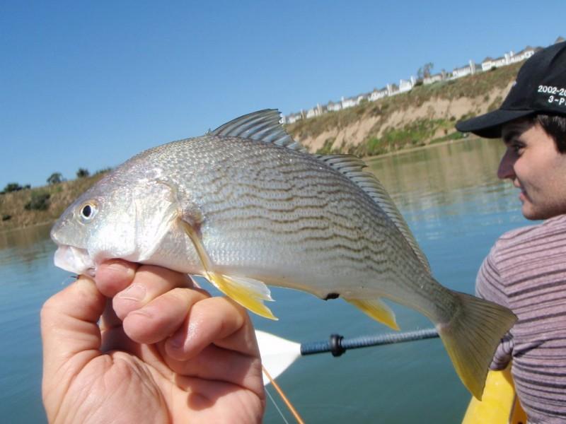 Sport fishing report grunion to run tonight newport for Dana point fish report