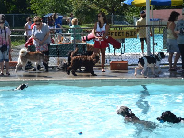 Dog Park Scarsdale Ny
