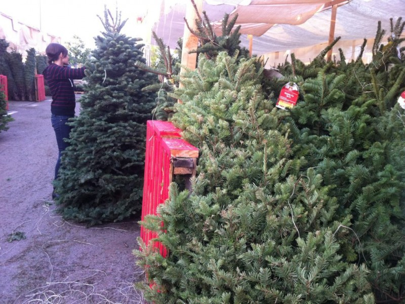 How To Pick A Fresh Christmas Tree