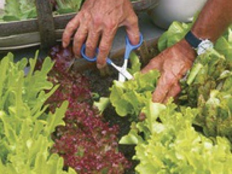 Consider these heat drought tolerant vegetables for your garden edina mn patch - Heat tolerant plants keeping gardens alive ...