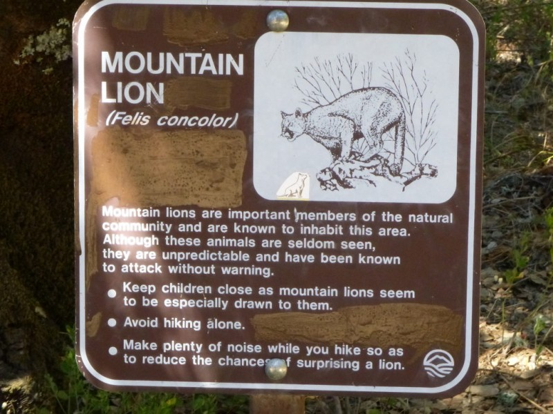 what to do if you meet a mountain lion