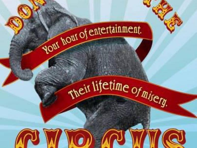 Animal Abuse Circus Circus Aka Animal Abuse