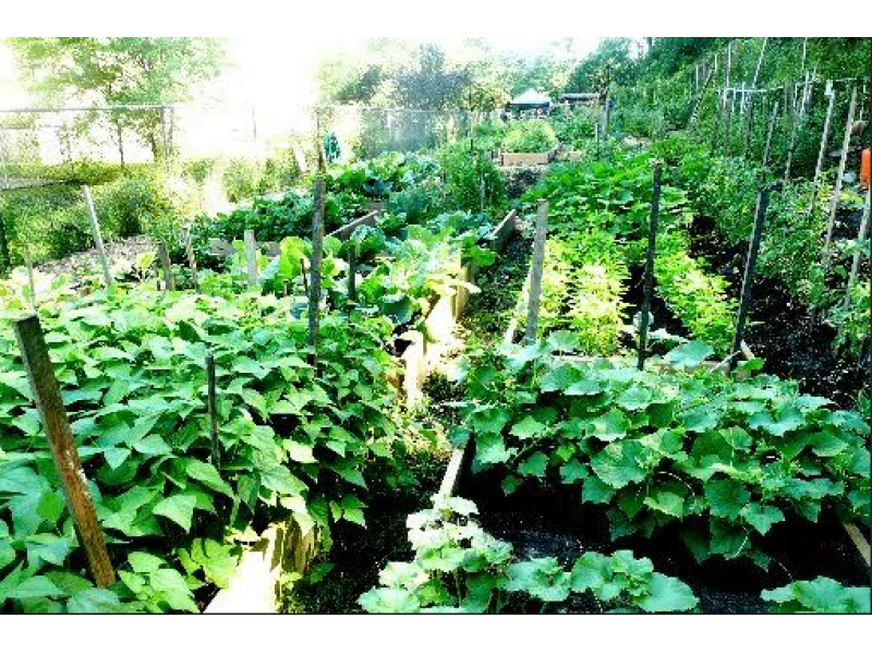 Expert tips for successful summer gardening in greenwich greenwich ct patch - Summer time gardening tips ...
