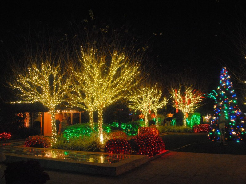 Strolling through the florida botanical gardens patch - Florida botanical gardens christmas lights ...