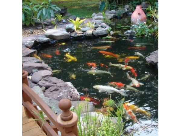 Building a koi pond inspires backyard getaway business for Portable koi pond