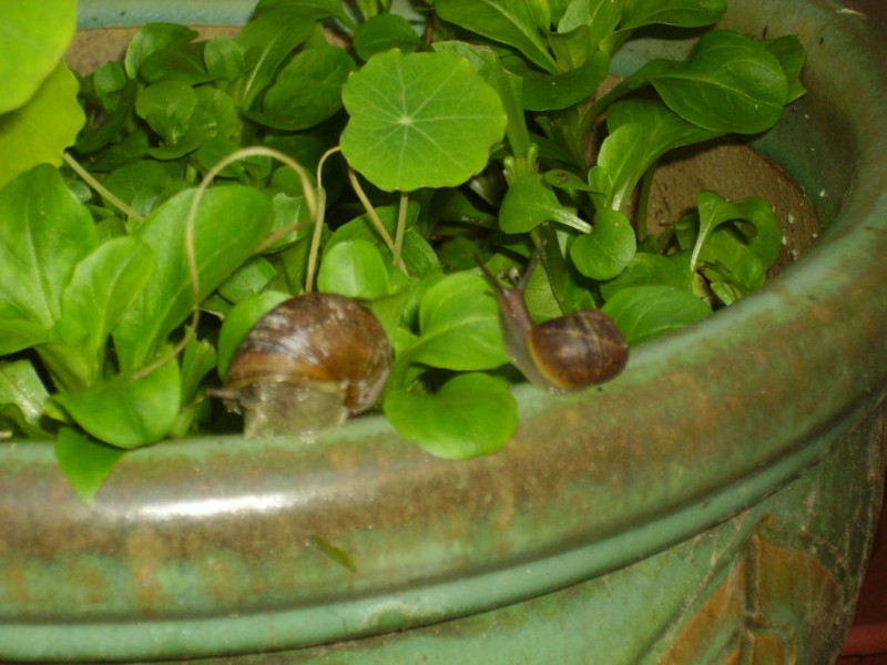 Getting Rid of Slugs and Snails the Natural Way