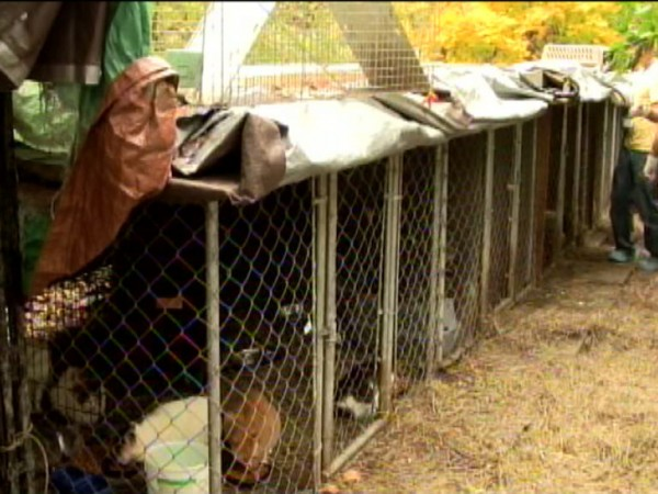 Animal Rescue Workers Help Catalogue Cats - Port ...  |Animal Rescue Worker