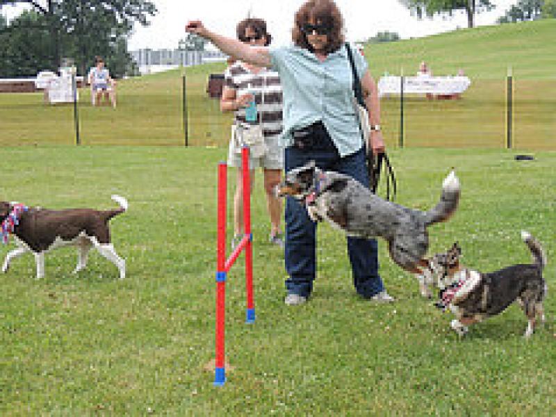 Redmond Ridge Dog Park
