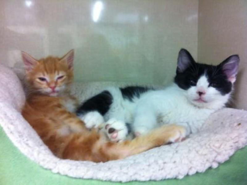 Cat Adoption Event Dc