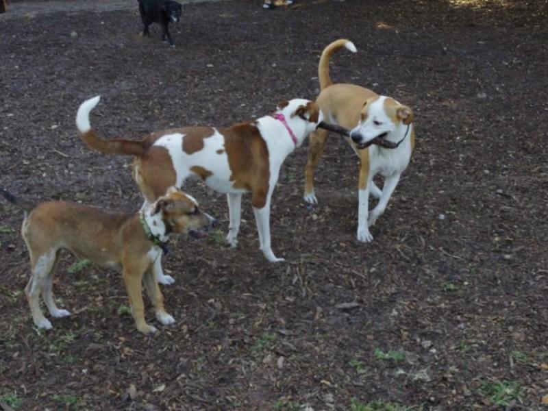 Safety Harbor Dog Park