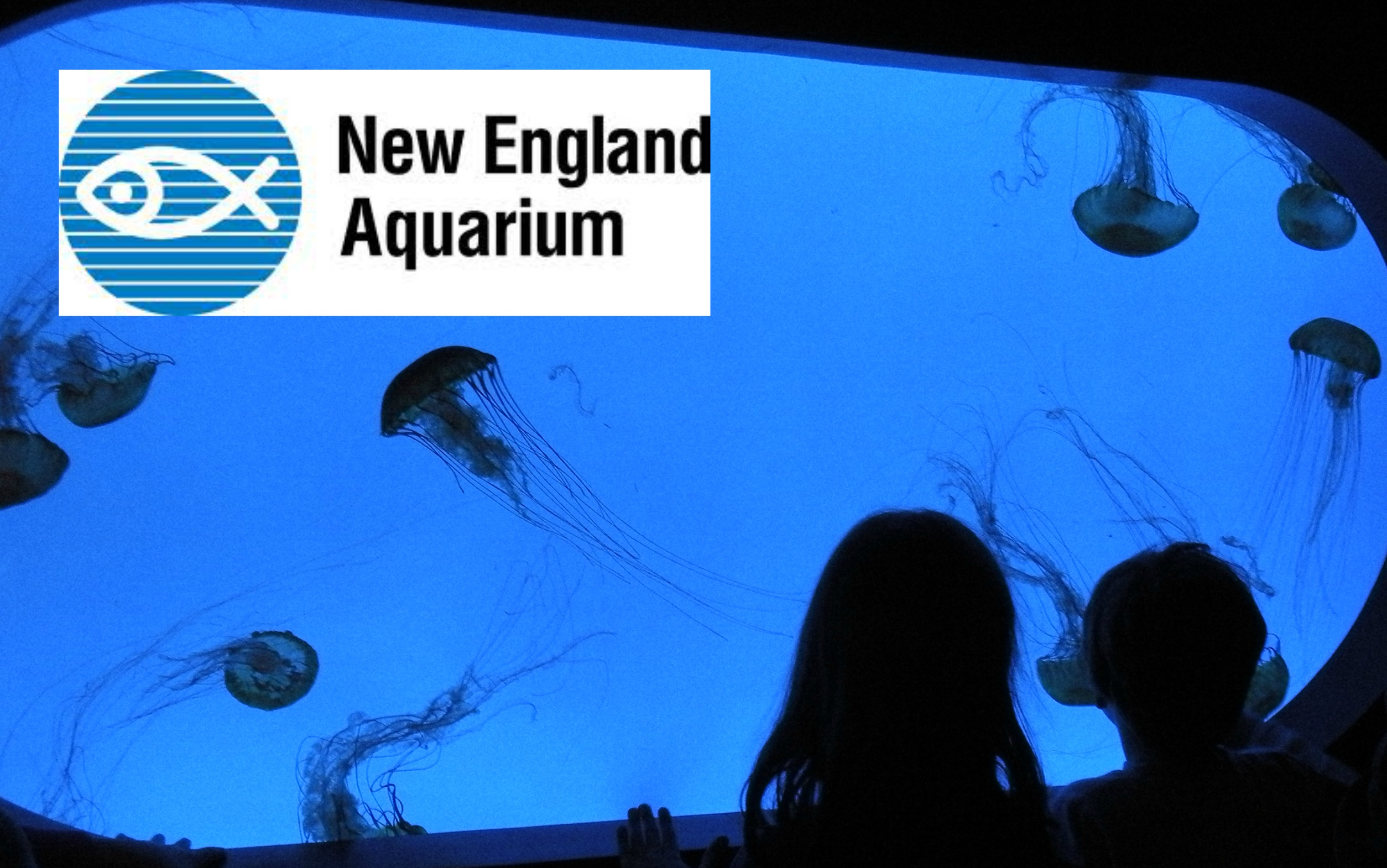 Boston aquarium discount coupons