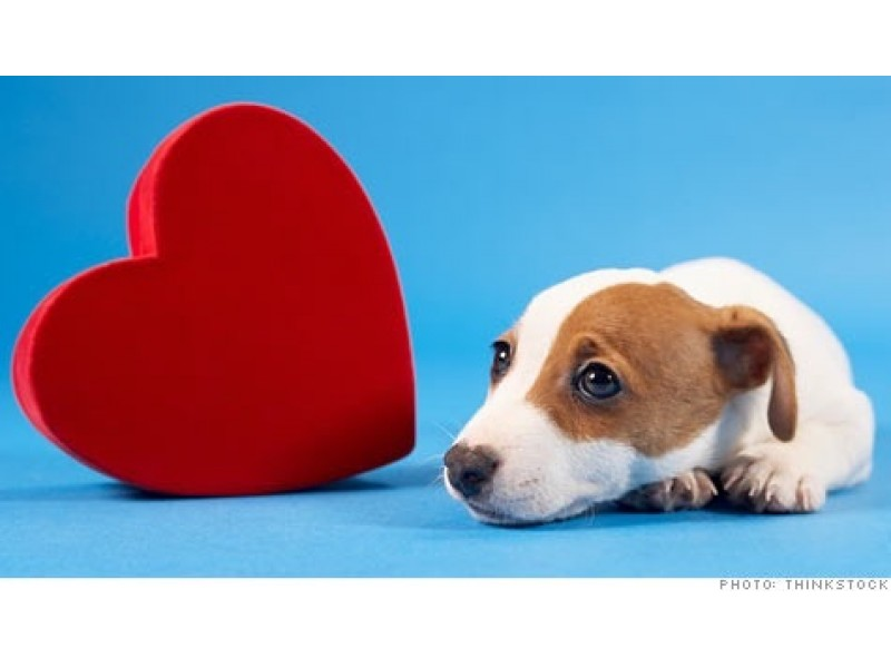 Dog Adoption And Stratford Ct