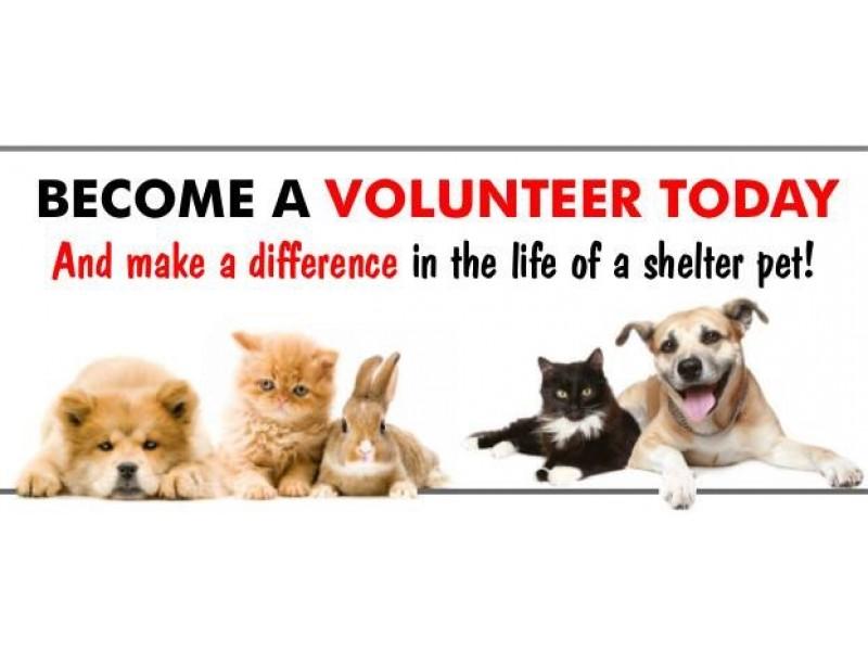Volunteer At Stratford Animal Shelter Patch