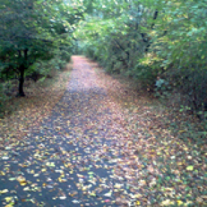Fall is great for running trails in Carroll Co.
