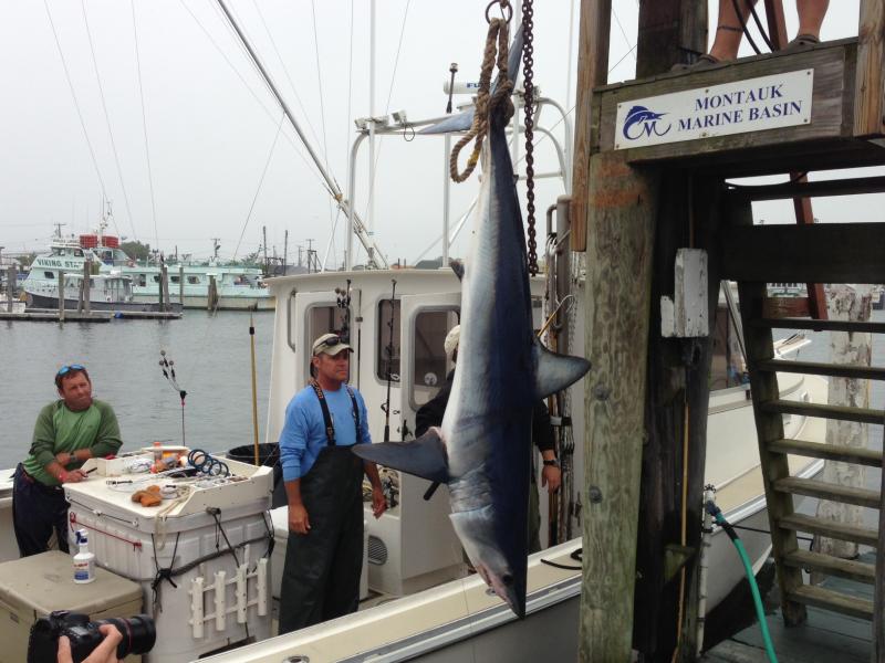 Shark 39 s eye no kill tournament starts saturday in for Montauk shark fishing