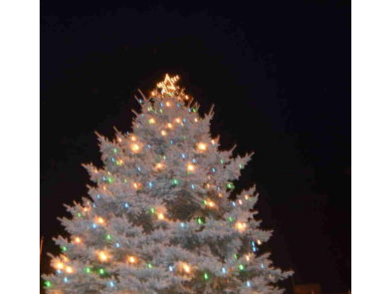 tree in the civic center plaza along with festive lightsthroughout