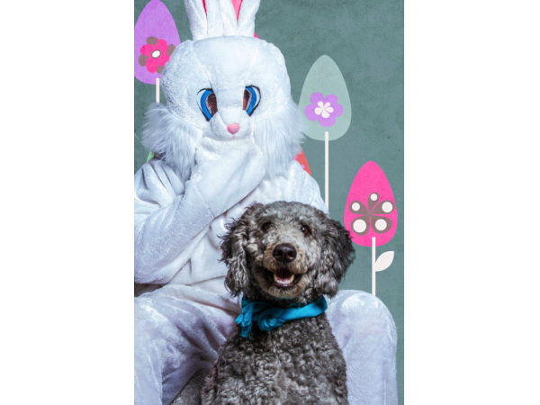 Easter Egg Hunt For Dogs At Zoom Room Redondo Beach Ca