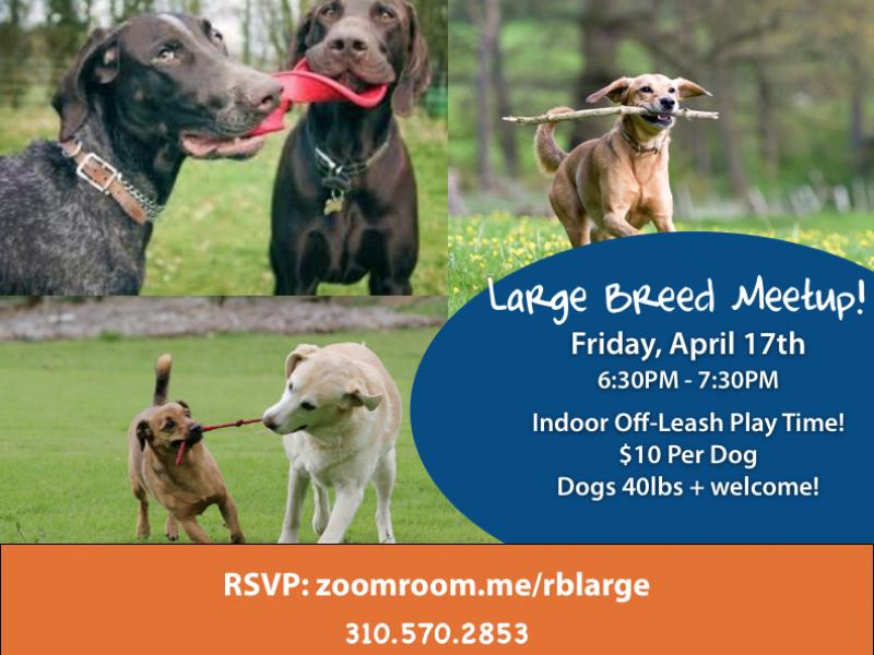Large Dog Playgroup This Friday At Zoom Room Redondo