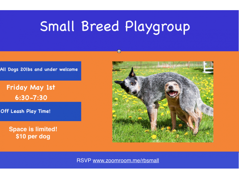 Small Dog Playgroup At Zoom Room Redondo Beach Ca Patch