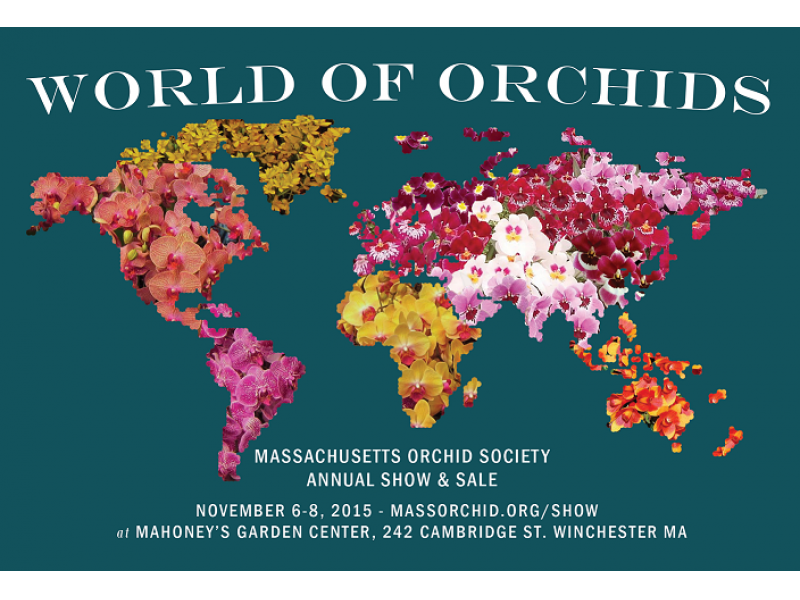 Mass Orchid Society Annual Orchid Show And Sale At Mahoney 39 S Winchester Winchester Ma Patch