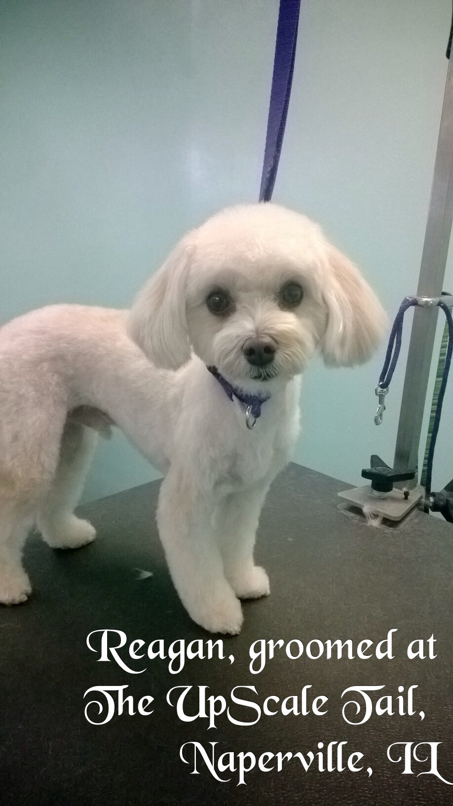 Hinsdale Dog Grooming