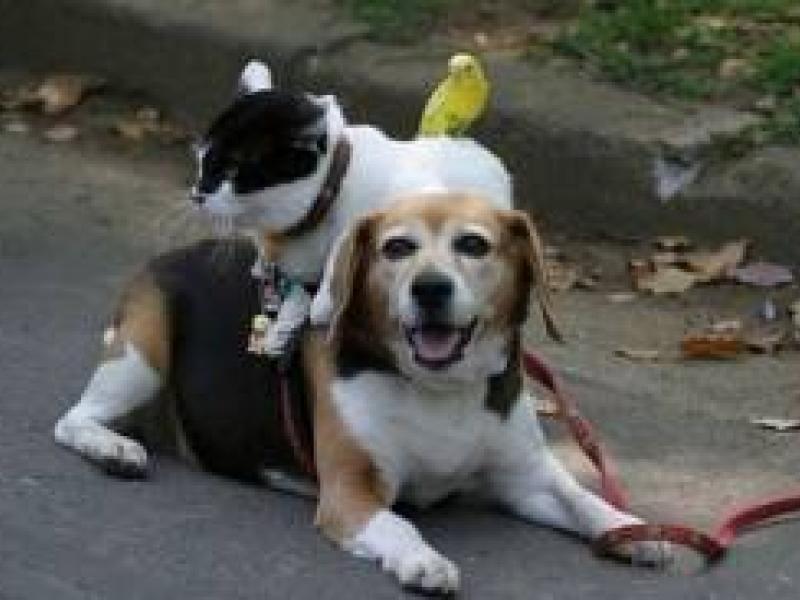 Pet Health Care Pet Health Care Services
