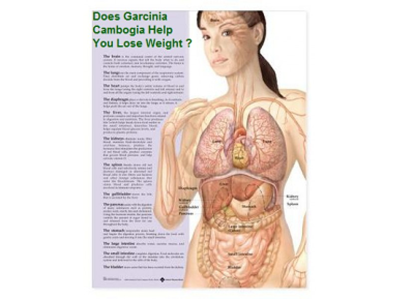 Garcinia cambogia Extract Side Effects/Where To Buy/Dr OZ/Free Trial