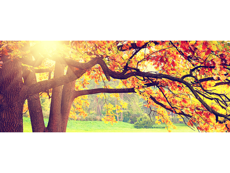 3 Reasons Fall Is The Best Season To Buy Or Sell A Home
