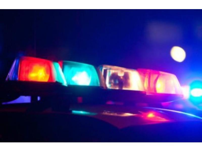 Police Log: Stray Dog Enters Residence - Patch.com