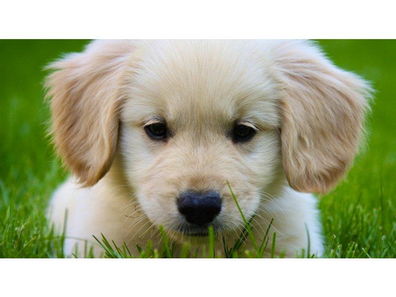 Woodbridge Pet Fair To Be Held This Weekend Woodbridge